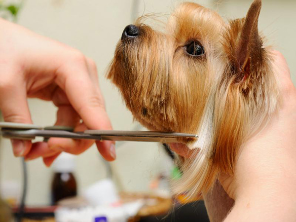 How To Trim A Dog S Face