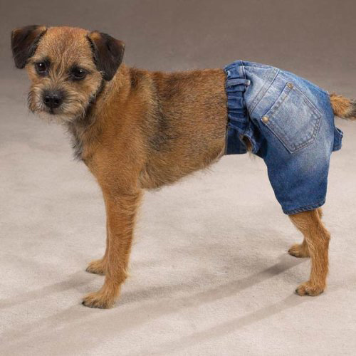 denim dog shorts