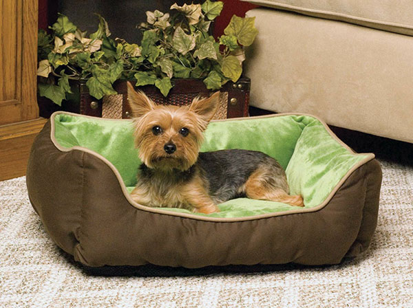 look here for comfortable small dog beds With dog beds small breeds