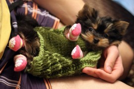 pics of cute yorkie puppies